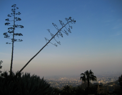 Runyon Canyon Los Angeles