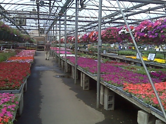 Bachman's Flowers, Minneapolis