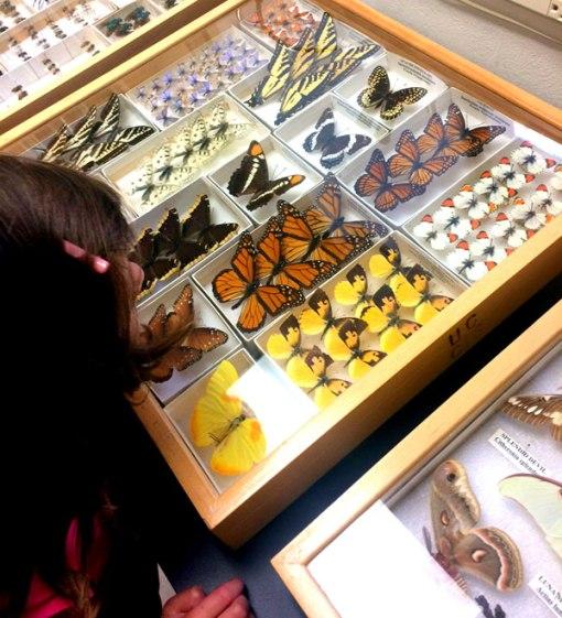 cal_essig_museum2